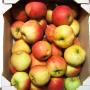 Apfel Elstar 5kg 2014