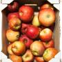 Apfel 5 kg Ideared 2014