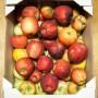 Apfel Wirtschaftsobst 2014